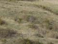 2006 templiers cevennes3