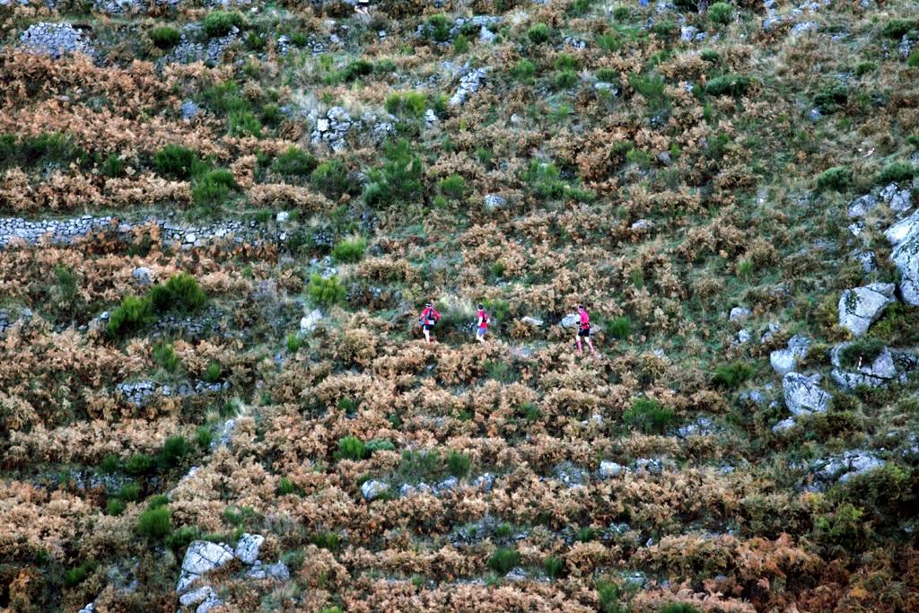 2007 Cévennes fougères