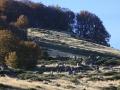 2007 templiers Cévennes 6